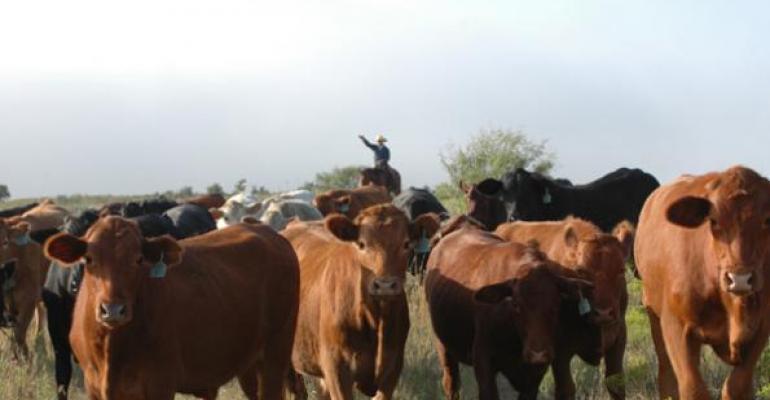 5 Trending Headlines: What will tomorrow's cowherd look like? PLUS: Effect of heavy fed cattle marketings