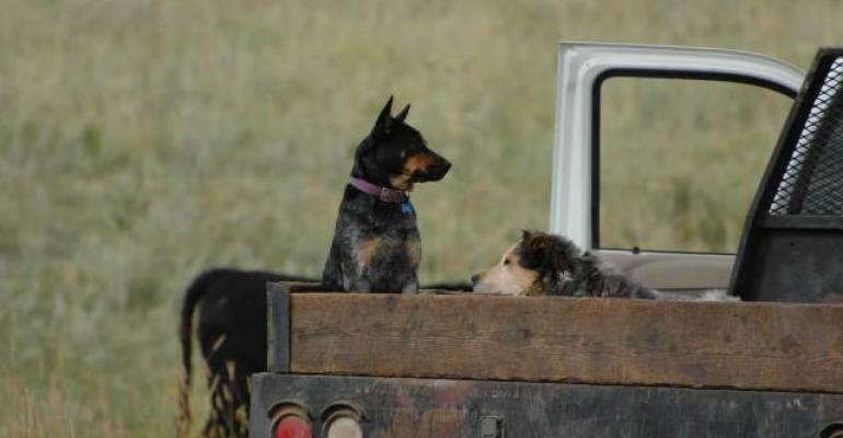 Ranch dogs