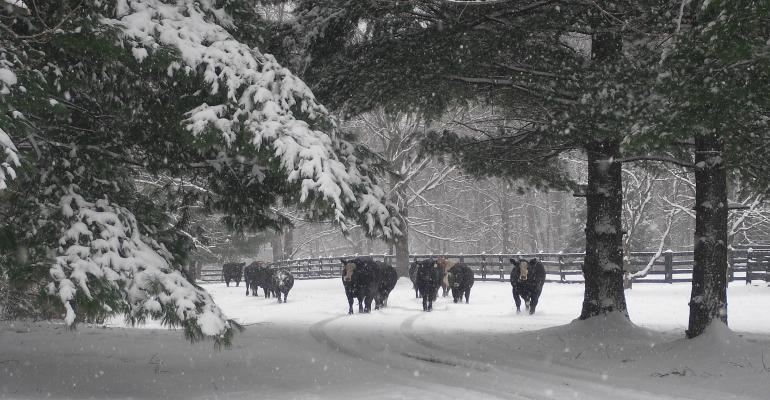 winter scenes from the ranch
