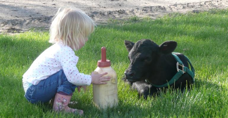 spring calving photos
