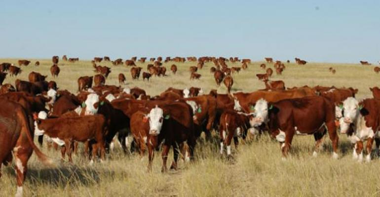 5 Trending Headlines: Cattle Inventory Report shows herd expansion, PLUS: The real story at MARC