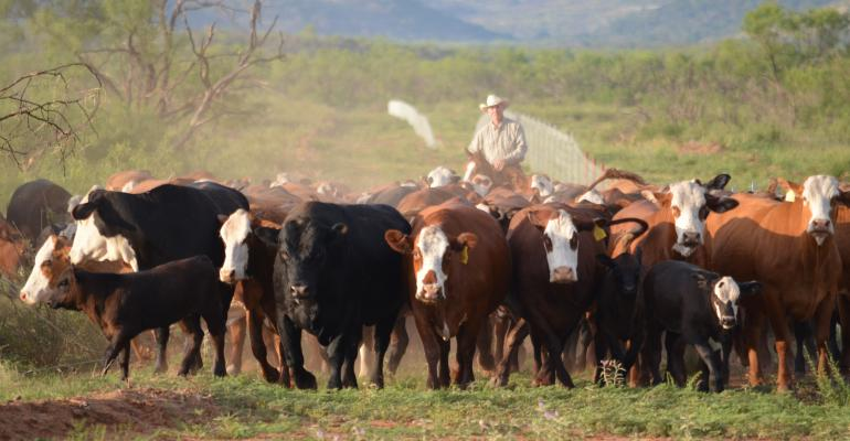 environmental stewardship leaders in beef industry