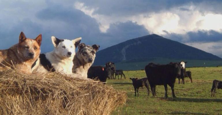 180  Photos Of Ranch Dogs