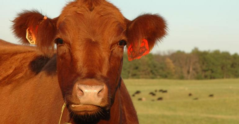 6 Trending Headlines: Online heifer development info available, plus: Do cattle prices have room to rise in 2015?