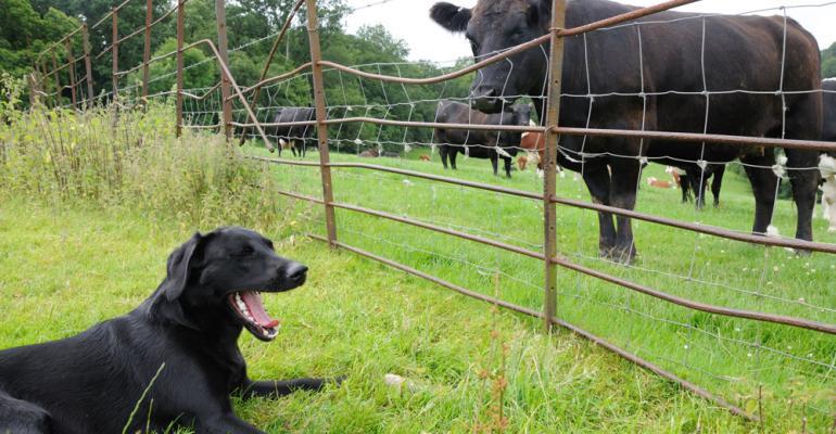 6 Trending Headlines: Do distiller's grains beat corn for energy? PLUS: How mob grazing works in big pastures