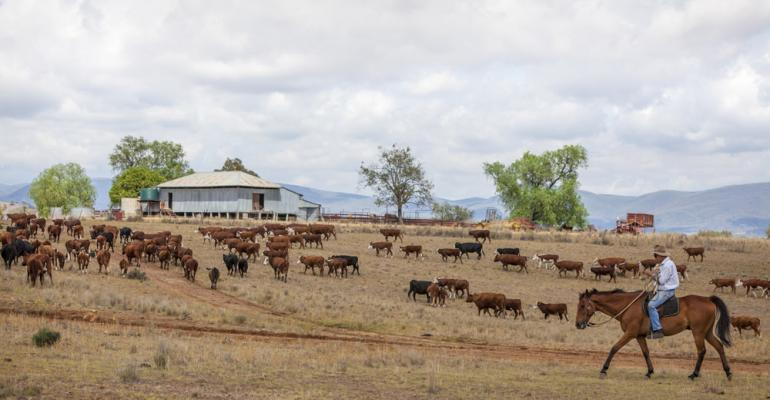 5 Trending Headlines: 10 tips for cutting cattle feeding costs, PLUS: Why body condition matters