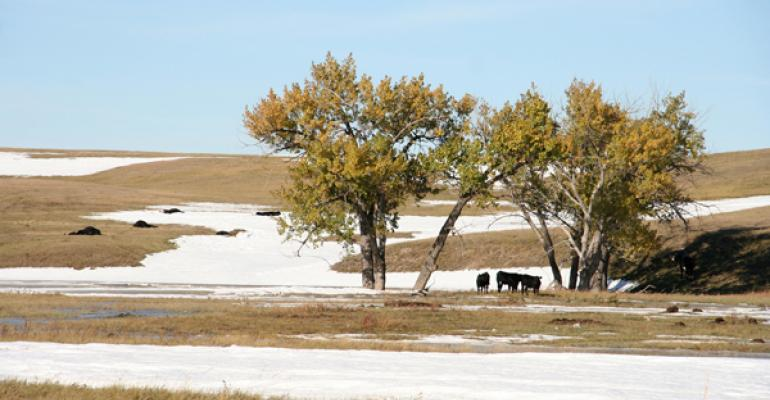 Cattle Death Toll Rises As 'Atlas' Blizzard Recovery Continues