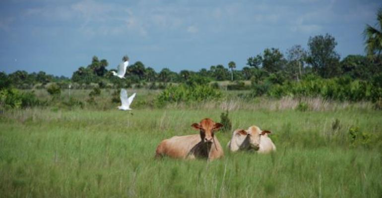 6 Trending Headlines: Can seaweed cut methane in cattle? PLUS: Helping veterans work in agriculture