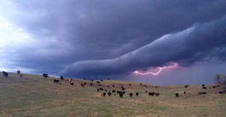55+ photos celebrating spring on the ranch