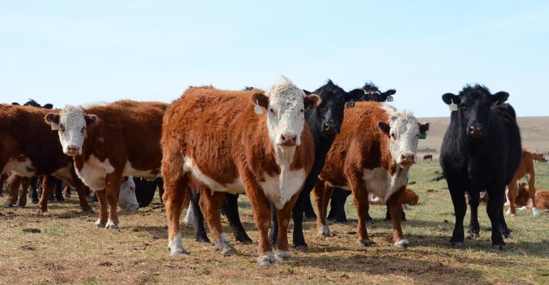 Hereford cow-calf herd