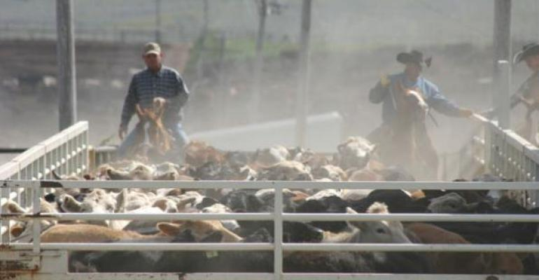 Loading out fed cattle