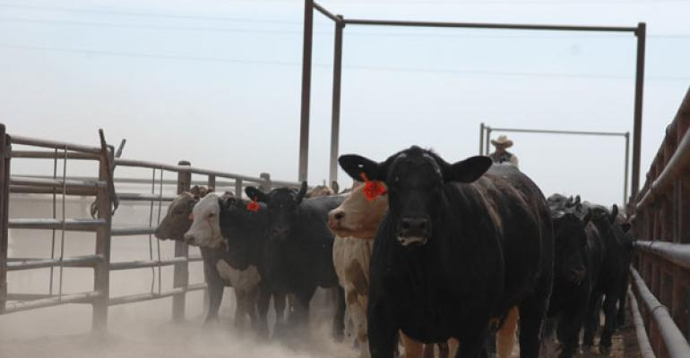 Loading up fed cattle