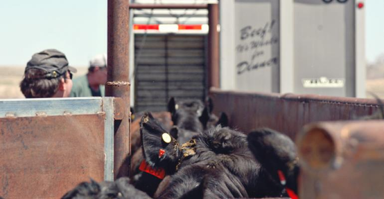 Marketing beef cattle
