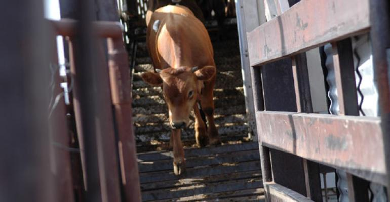marketing calves