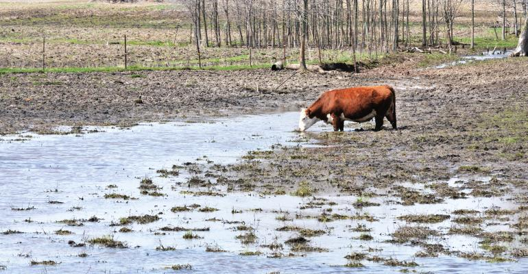 muddy-pasture-GettyImages-477028732.jpg