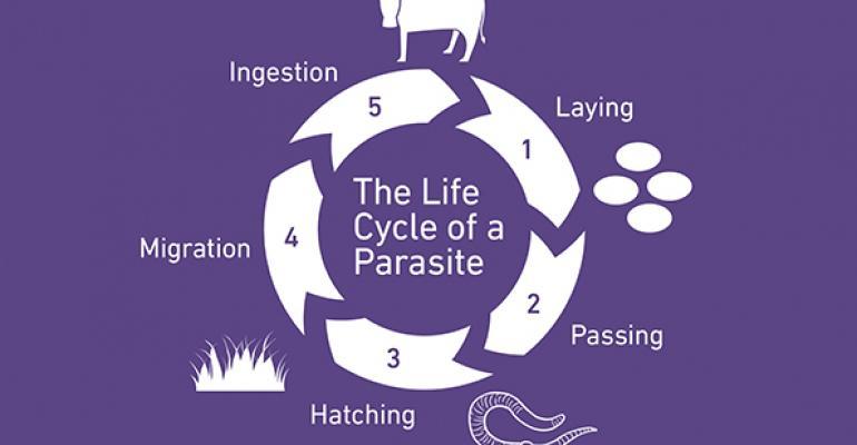 parasite-lifecycle.jpg