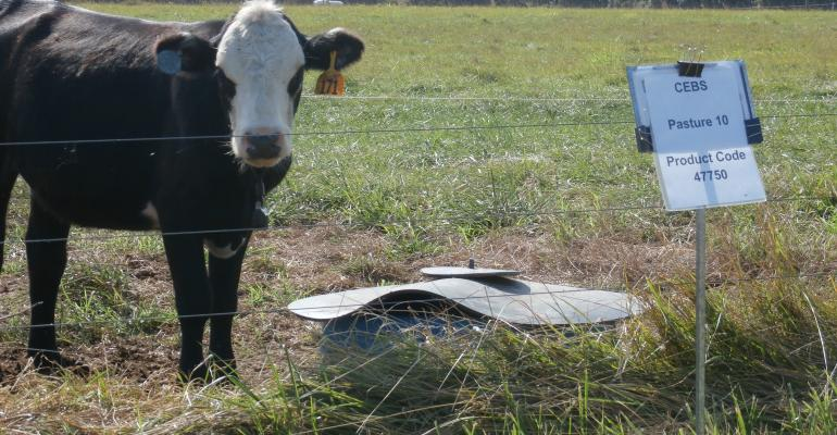 Minerals for cattle in pastures