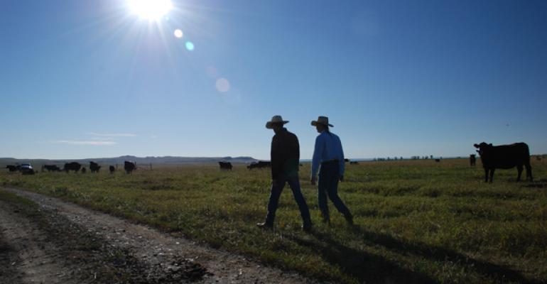 People walking through a pasture