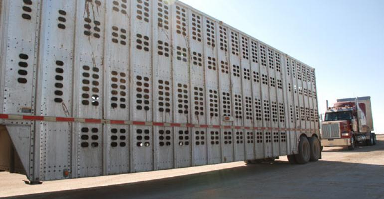 Moving beef feedlot cattle