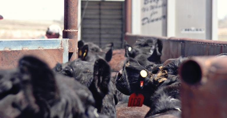 USDA cattle national feeder summary