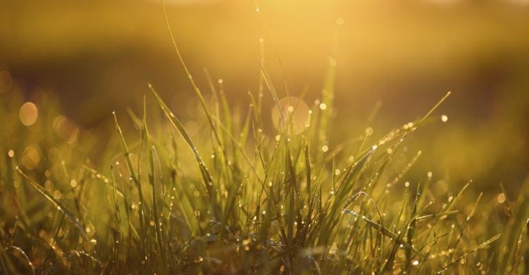 pasture with raindrops