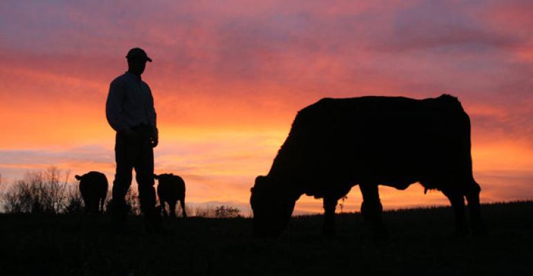 Rancher checking cows