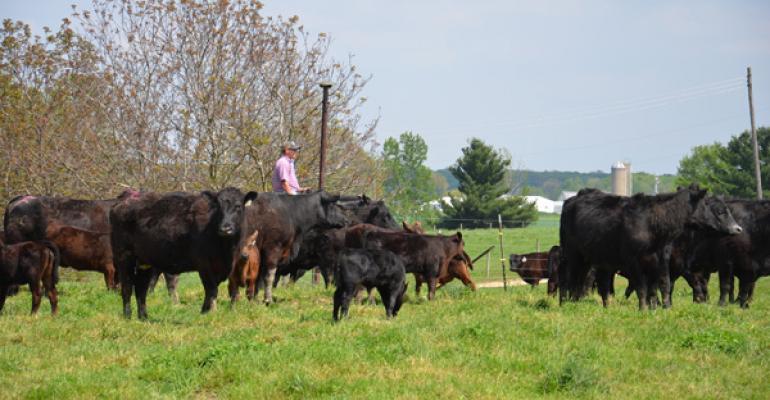 Rancher checking cowherd