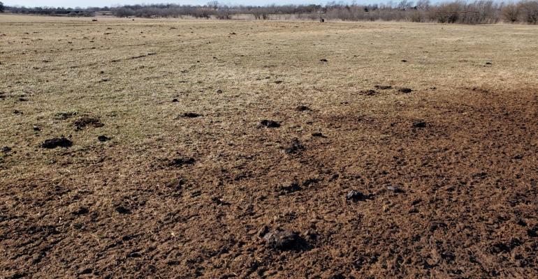 sacrifice-pasture.jpg