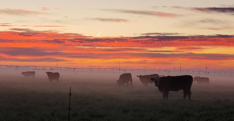 shelley-huguley-20-cattle-sunrise-equipment-14.jpg