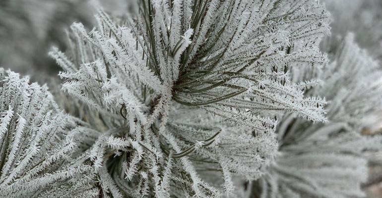 snowy branch.jpg