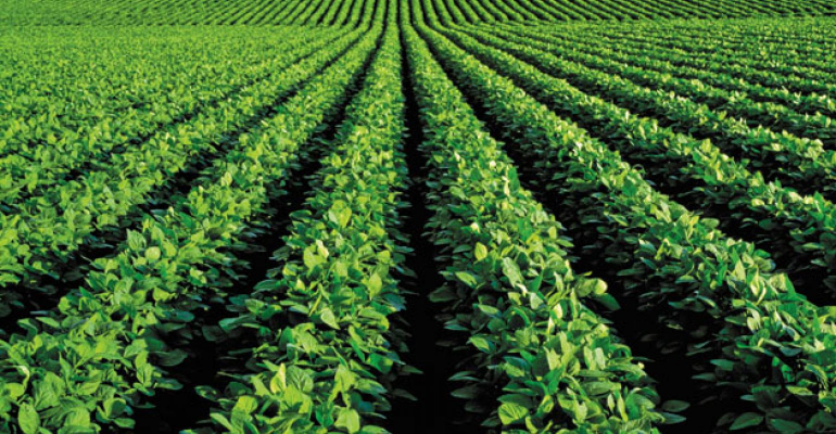 Corn and Soybean Outlook