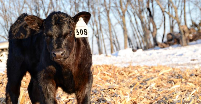cattle disease preventing scours