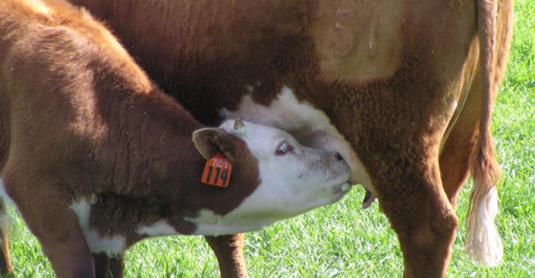 5 Steps To A Fair Beef Cow Lease Running Cattle On Shares Beef