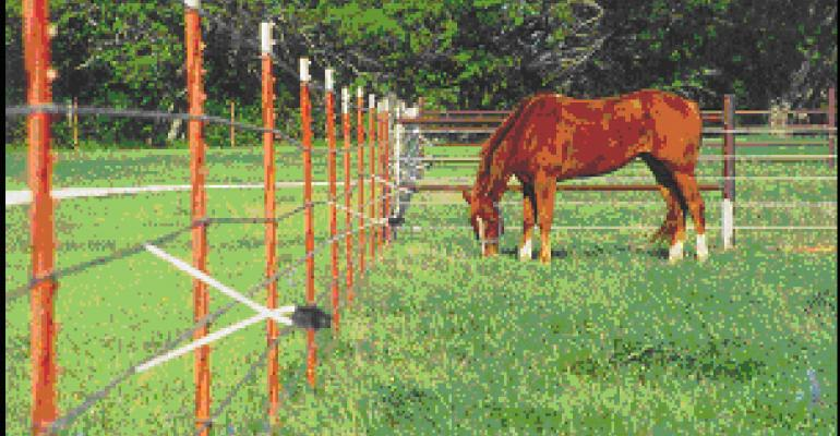 Training Stock to Power Fence