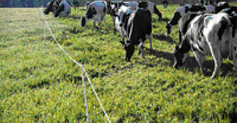 Temporary Fencing for Controlled Grazing