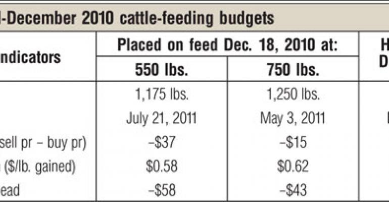 2010 Was A Year Of Change For Cattle Feeding Sector