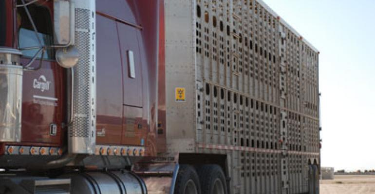 Cattle Transport Training & Certification