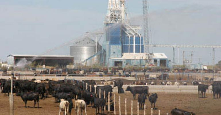 Sustainability From A Cattle-Feeding Perspective