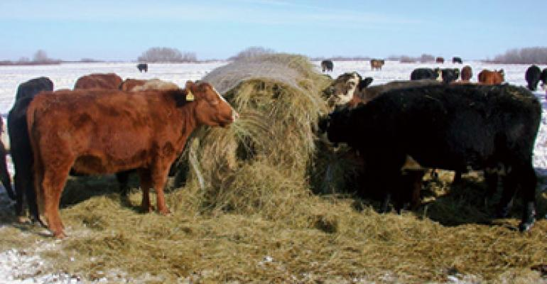Bale Grazing Lets Cows Feed Themselves