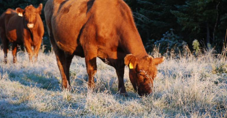 Cow Nutrition During Early Gestation Is Important