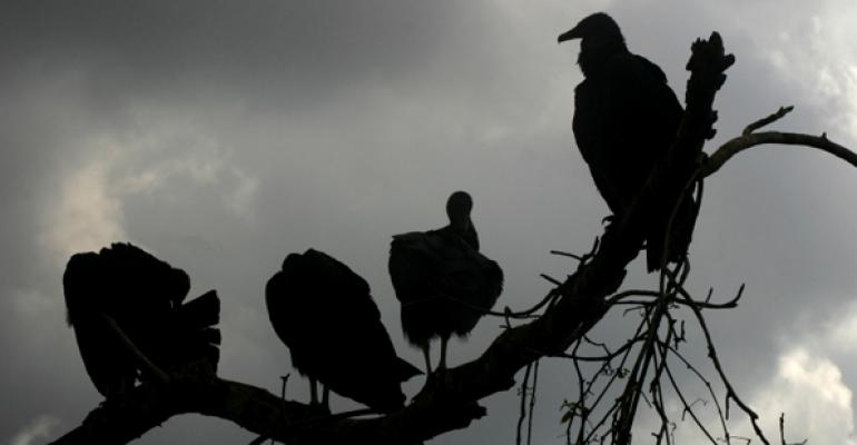 Cattle producers take on black vultures