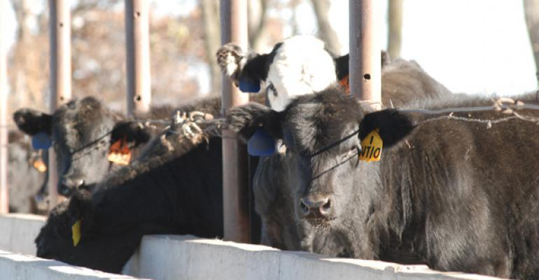 Winter Cattle Feeding Doesn't Have To Break The Bank