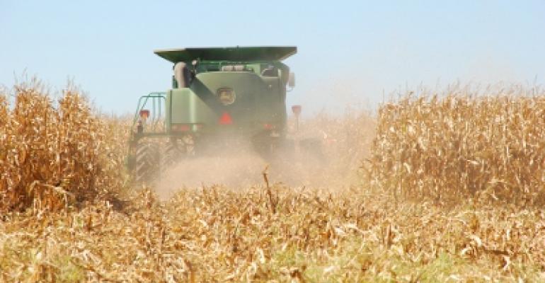 Corn Stocks Estimated Higher