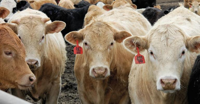 Fed Cattle Can Make Money, Even With High Inputs