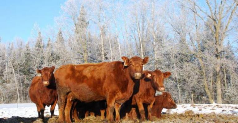 Winter Cow Management