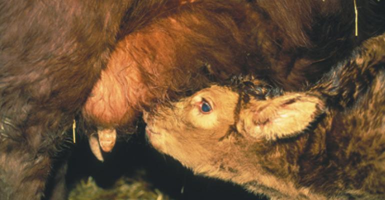 Cattlemen Have Tax Options