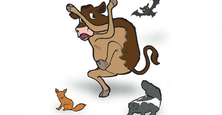rabies as a cattle disease