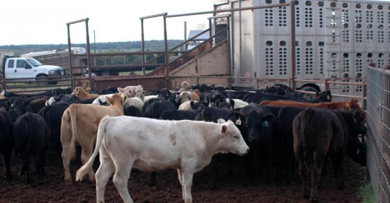 Fed-Cattle Prices Reach New Record Highs