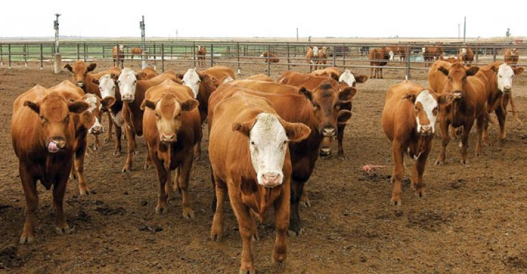 Feedyards Turn To Feeding Cows