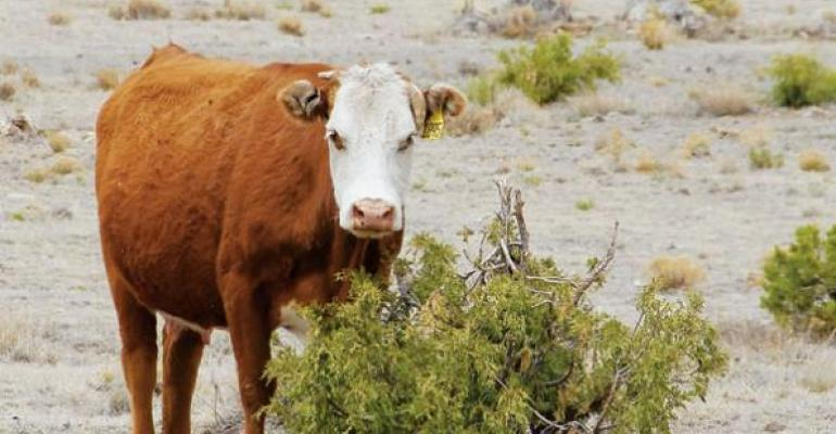 Patience Is The Key In Recovering Drought-Stressed Pasture